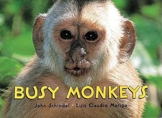 Busy Monkeys By Schindel, John/ Marigo, Luiz Claudio/ Marigo, Luiz Claudio (ILT)